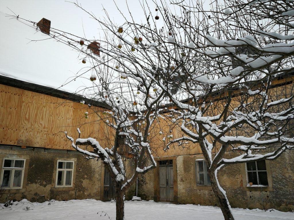 Verschneite Obstbäume im Hof der Schwesternhäuser